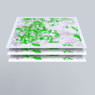 Four stages - forest map layers
