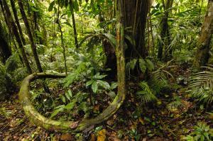 Yasuni National Park, Amazon Rainforest, Ecuador. Author: Andrew Wallinski